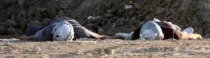 Dos cadáveres encontrados cerca de Tijuana. (EFE)